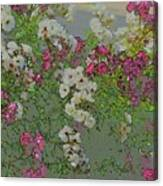 Red And White Roses  Medium Toned Abstract Canvas Print