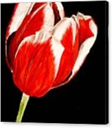 Red And White Tulip Canvas Print