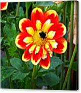 Red And Yellow Flower With Bee Canvas Print