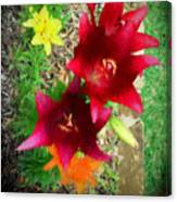 Red And Yellow Garden Flowers Canvas Print