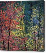Red And Yellow Leaves Abstract Horizontal Number 1 Canvas Print