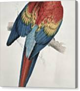 Red And Yellow Macaw  Canvas Print