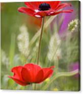 Red Anemone Coronaria In Nature Canvas Print