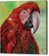 Red  Ara Chloropterus Macaw Canvas Print
