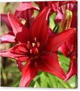 Red Asian Lilly Canvas Print