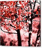 Red Aspen II Canvas Print