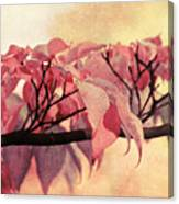 Red Autumn Day Canvas Print