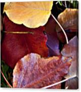 Red Autumn Leaves Canvas Print