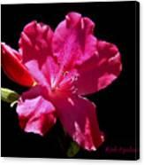 Red Azalea Canvas Print