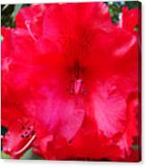 Red Azaleas Flowers 4 Red Azalea Garden Giclee Art Prints Baslee Troutman Canvas Print