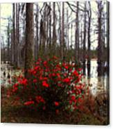 Red Azaleas In The Swamp Canvas Print