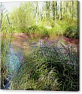 Red Azolla Canvas Print