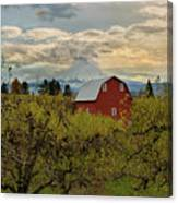 Red Barn At Pear Orchard Canvas Print