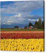 Red Barn Tulip Farm Canvas Print