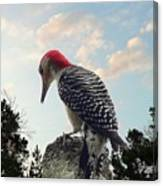 Red-bellied Woodpecker - Tree Top Canvas Print