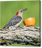 Red-bellied Woodpecker At The Feeder Canvas Print