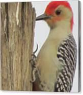 Red-bellied Woodpecker II Canvas Print