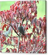 Red Bellied Woodpecker In Dogwood Canvas Print