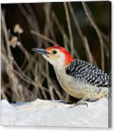 Red-bellied Woodpecker In The Snow Canvas Print