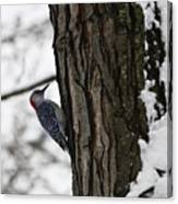 Red Bellied Woodpecker No 1 Canvas Print