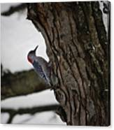Red Bellied Woodpecker No 2 Canvas Print