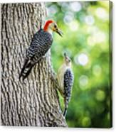 Red-bellied Woodpeckers Canvas Print