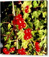 Red Berries And Ivy Canvas Print
