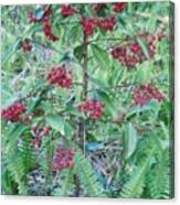 Red Berries Canvas Print