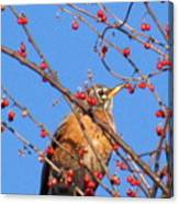 Red Berry Robin Canvas Print