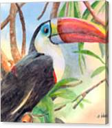 Red-billed Toucan Canvas Print