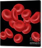 Red Blood Cells, Illustration Canvas Print