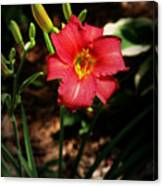 Red Bloom Canvas Print