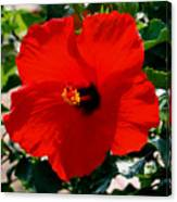 Red Bloomers Canvas Print