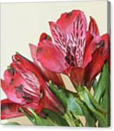 Red Blooms Poster Art Canvas Print