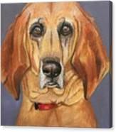 Red Bone Coon Hound Canvas Print