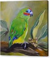 Red Browed Fig Parrot  Canvas Print