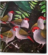 Red-browed Finch Flock Weipa Canvas Print