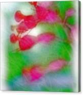 Red Buckeye Canvas Print