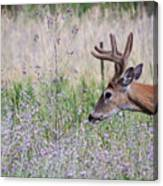 Red Bucks 4 Canvas Print