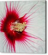 Red Burst Canvas Print
