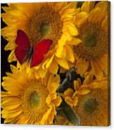 Red Butterfly With Four Sunflowers Canvas Print
