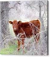 Red Calf In Winter Brush Canvas Print