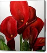 Red Callas Canvas Print