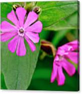 Red Campion - Fairy Flower. Canvas Print