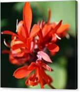 Red Canna Flower Canvas Print