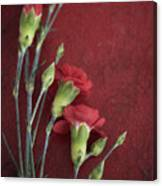 Red Carnation Stems Canvas Print