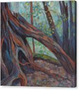 Red Cedar Canvas Print