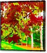 Red Chinese Maple Leaf's Canvas Print
