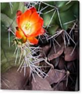 Red Claretcup Cactus Canvas Print