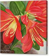 Red Clivias - Watercolor Canvas Print